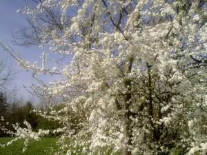 Frühling im Grüngürtel - (c) Wolfgang Rüttgers