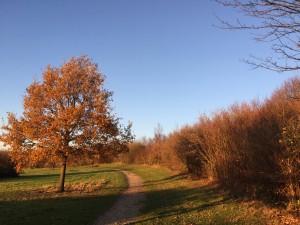 Weg und Baum mit braunem Laub unter blauem Himmel